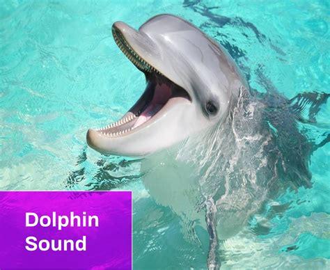 dolphin sound  mp  mingo sounds