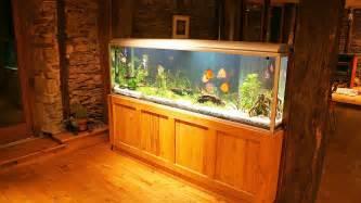 home design big fish how to maintain a big fish tank aquarium care youtube