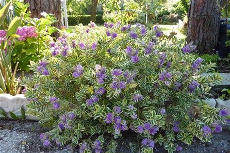 vendita piante da giardino le migliori piante da giardino in vendita solopiante le