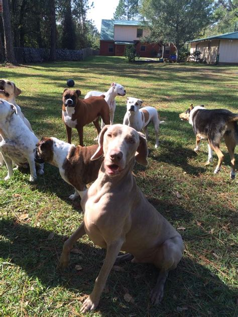 rough house dog daycare doggy day care in st augustine fl ruff house south 904 800 8254