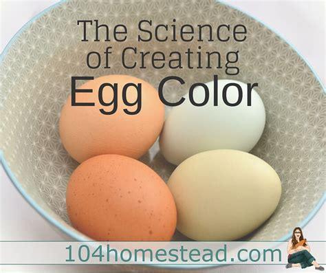 color of eggs mixing chicken breeds for egg color