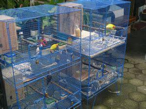 Kandang Kucing Dari Kawat tips membuat kandang lovebird jual lovebird cara