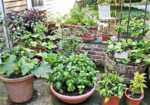 tips for growing vegetables in containers