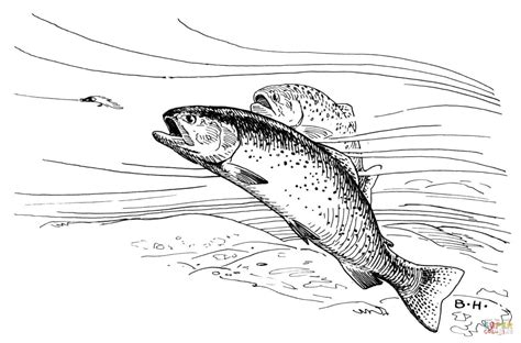 cutthroat trout coloring pages
