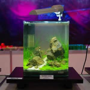 111 best cube aquascape ideas images on