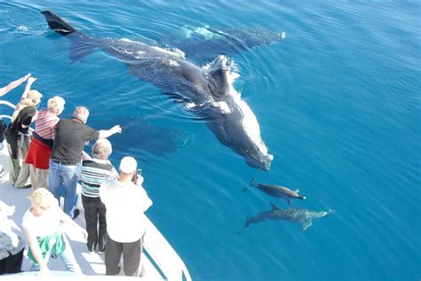 boat trip queensland whale watching in queensland australia welcome to your