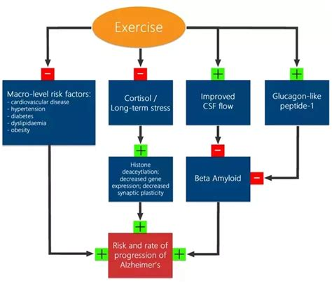 8 Negative Effects Of Exercise by What Effects Does Physical Exercise On The Brain Quora