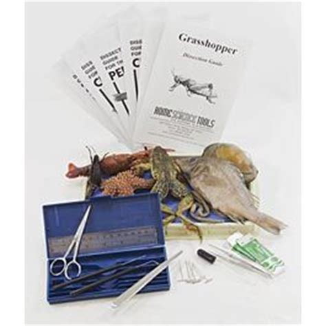 earthworm dissection kit dissection kit intermediate 33 95 science