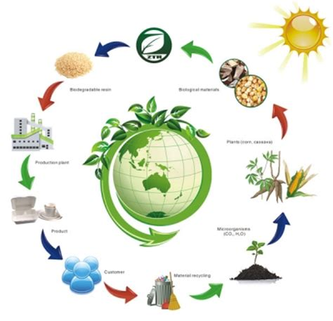 Ecological Imbalance In Nature Essay by What Is The Meaning Of The Term Ecological Balance My Science School