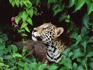 tropical forest animals and plants tropical rainforest animals and plants tropical