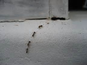 small ants in kitchen 29 jul 2009 filed how to author