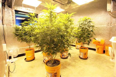 How Much Does A Grow Room Cost by Marijuana Cultivation Facilities Priciest In Az Co Az
