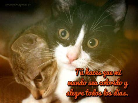 imagenes romanticas de gatos im 225 genes de gatos con frases de amor para descargar gratis