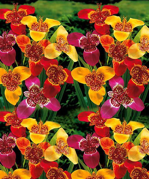 tiger flowers bakker com