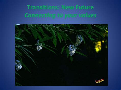Cd Terra Reinvent Yourself reinventing yourself