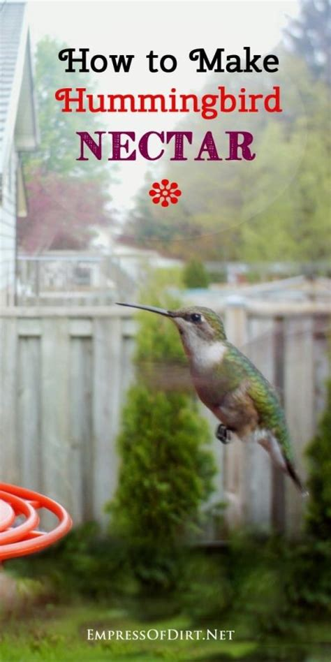 17 best ideas about hummingbird nectar on pinterest