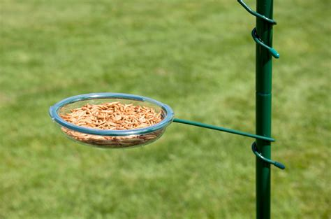bird seed feeders squirrel proof how to make