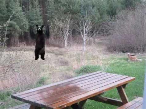 Bear At Picnic Table Meme - patient bear is patient youtube