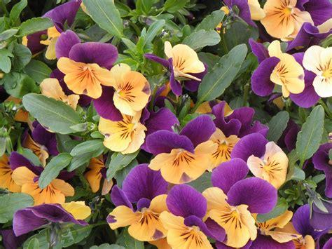 assago fiori floricoltura mery estevez arredo urbano floreale