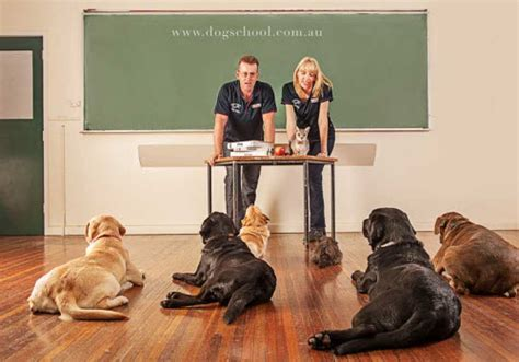 puppies plus melbourne fl trainer central florida melbourne fl obedience trainer