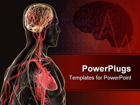 anatomy ppt templates free 3d rendered anatomy illustration of a human shape