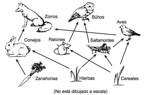 cadenas troficas introduccion actividad 3 estudio de los ecosistemas