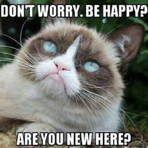 Grumpy Cat Meme Happy - grumpy cat