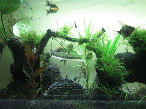 aquaplantarium aquascape portofolio
