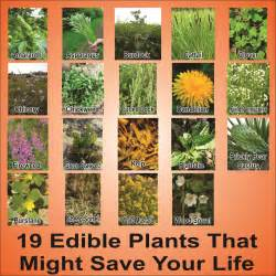 edible plants in your backyard hd survivalkit