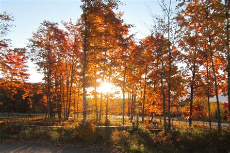 michigan farms keep eye on demand for maple syrup