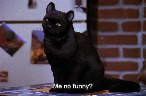 Cat Salem 27 times salem the cat said what you were thinking