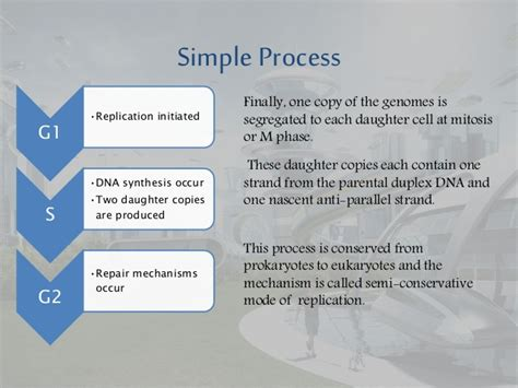 Cd Ori Steps Step One 1 eukaryotes replication