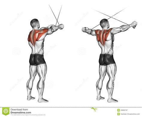 cross bench dips bench dip spieren google zoeken anatomy of the muscles