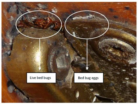 bed bugs pesticide bed bugs pesticides assured environmental