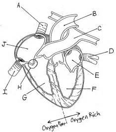 Heart Labeling Worksheet » Home Design 2017