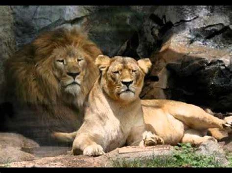 imagenes de animales herbivoros y carnivoros carnivoros y herbivoros ejemplos youtube