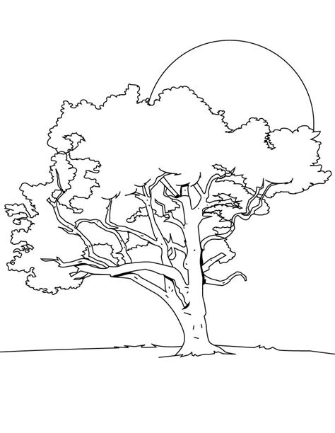 Tree Coloring Pages Coloring Pages To Print Tree Coloring Page