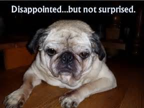 Disappointed Dog Meme - riley disappointed but not surprised fluffybutts funny