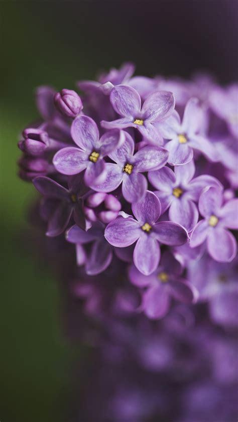 Anting Flower Petals Violet Soft Purple pin flower lilac violet petals petal drop macro color sky
