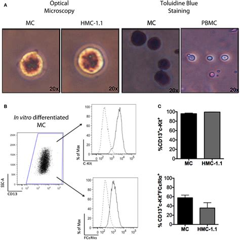frontiers tolerogenic dendritic cells for 100 mast cells and dendritic cells il 10 enhances