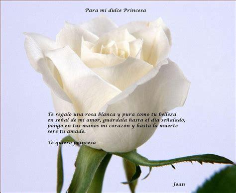 imagen de una hermosa rosa blanca para whatsapp rosa de princesa una rosa blanca y pura como tu belleza