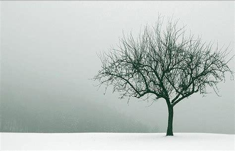 light grey wallpaper trees tree wallpaper winter hd desktop wallpapers 4k hd