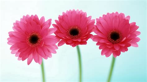 pictures  flowers     wow style