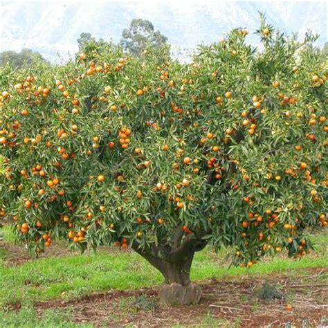 pot pour plante 4713 cl 233 mentine vente en ligne de plants de cl 233 mentine pas
