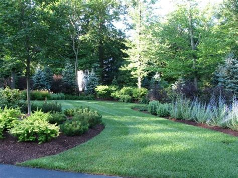 the best trees and shrubs for a natural privacy fence neave landscaping