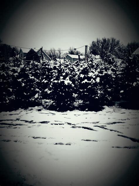 28 best christmas tree farm mn blackwoods christmas