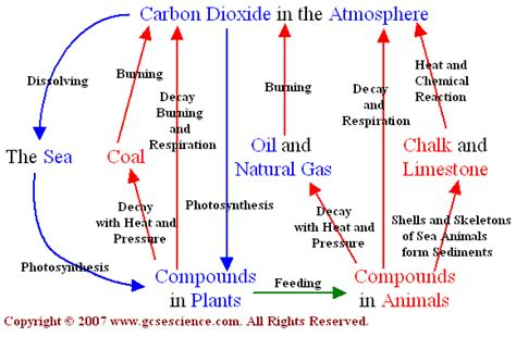 Carbon Cycle Essay by College Essays Subject Performing Get Pro Help 1 822 Completed Orders Today For