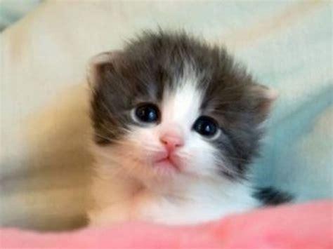 imagenes tiernas de animales fotos de animales tiernos buscar con google gatitos