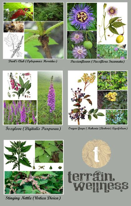 nature medicine essays on wildness and wellness books medicine growing in oregon 5 plants that could