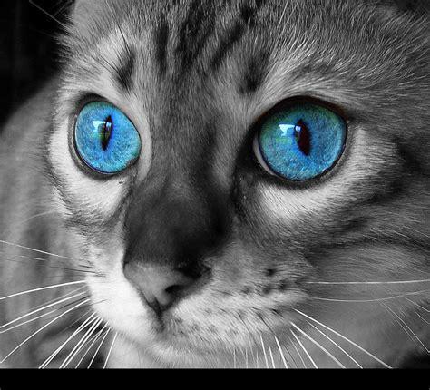Cat Eye Blue Berkualitas cat with blue by berne2006888 on deviantart